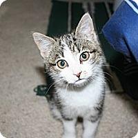 Adopt A Pet :: Hailley - Kalispell, MT