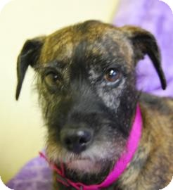 Terrier (Unknown Type, Medium) Mix Dog for adoption in Philadelphia, Pennsylvania - Gracie