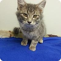 Adopt A Pet :: Venice - St. Louis, MO