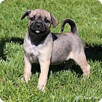 Adopt A Pet :: Revere - Bedford, VA