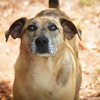 Adopt A Pet :: Copperpot - Fayetteville, GA