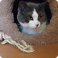 Adopt A Pet :: Cosmo - Aurora, IL