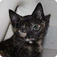 Adopt A Pet :: Sadie (LE) - Little Falls, NJ