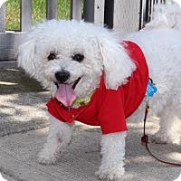 Adopt A Pet :: Benji - Surrey, BC