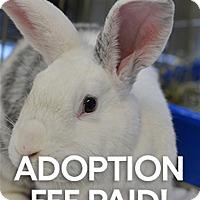 Adopt A Pet :: Bobbie - Novato, CA