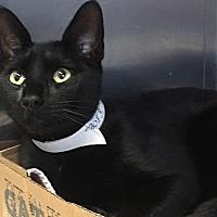 Adopt A Pet :: Hollywood - East Brunswick, NJ