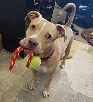 Terrier (Unknown Type, Medium) Mix Dog for adoption in Umatilla, Florida - Marco
