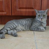 Adopt A Pet :: Priscilla - Hollywood, FL