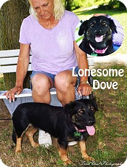 Corgi Mix Dog for adoption in Union City, Tennessee - Lonesome Dove