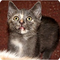 Adopt A Pet :: June Bug - Xenia, OH