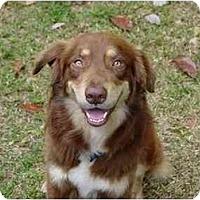 Adopt A Pet :: Duncan - Orlando, FL