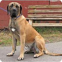 Adopt A Pet :: Tank - Asheboro, NC