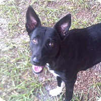 Adopt A Pet :: Jillian - Orange Lake, FL