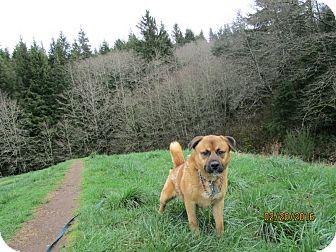 Shepherd (Unknown Type)/Akita Mix Dog for adoption in Tillamook, Oregon - Sammy