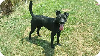 Terrier (Unknown Type, Small) Mix Dog for adoption in Moberly, Missouri - Scud the Stud