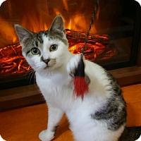 Adopt A Pet :: Autumn (5-month girl) - Witter, AR