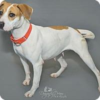 Adopt A Pet :: Lily - Waynesboro, PA