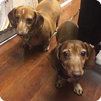 Adopt A Pet :: Ally & Wishes - Oak Ridge, NJ