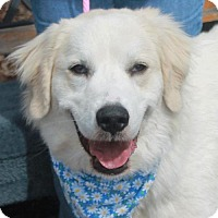 Adopt A Pet :: Layla-PENDING - Garfield Heights, OH