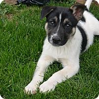 Adopt A Pet :: Indy - Denver, CO