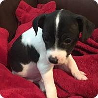 Adopt A Pet :: Expo - Oakley, CA