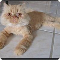 Adopt A Pet :: Galaxy - Gilbert, AZ