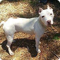 Adopt A Pet :: Maxine - Pensacola, FL