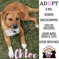Adopt A Pet :: Chloe - Troutville, VA