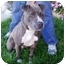 Photo 3 - American Pit Bull Terrier Mix Dog for adoption in Berkeley, California - Sibyl