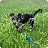 Adopt A Pet :: SNAZZY-JJ - Roundup, MT
