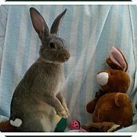 Adopt A Pet :: Caldwell - Williston, FL