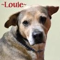 Shepherd (Unknown Type) Mix Dog for adoption in Jackson, Mississippi - Louie