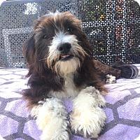 Adopt A Pet :: Martin - Van Nuys, CA