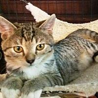Adopt A Pet :: Bean - Pasadena, CA