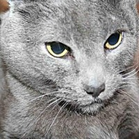 Adopt A Pet :: SARA - Aurora, IL