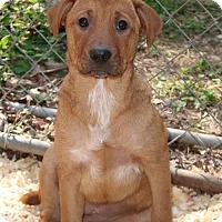 Adopt A Pet :: Wattana - Bedminster, NJ