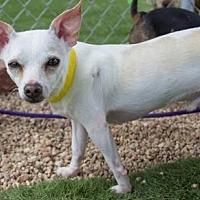 Adopt A Pet :: Zeke - Colorado Springs, CO