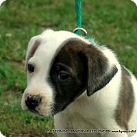 Adopt A Pet :: T-bone/ADOPTED - PRINCETON, KY