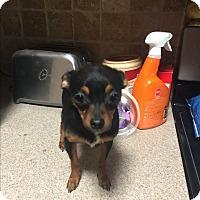 Adopt A Pet :: Gidgie - Blanchard, OK