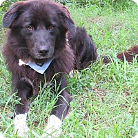 Adopt A Pet :: Conner - Kiowa, OK