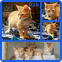 Adopt A Pet :: Dak - Arlington/Ft Worth, TX