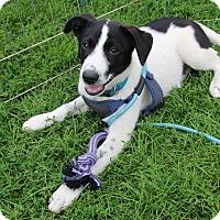Adopt A Pet :: Joey - Rochester, MN