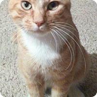 Adopt A Pet :: Sir Jaspurr - Spring, TX