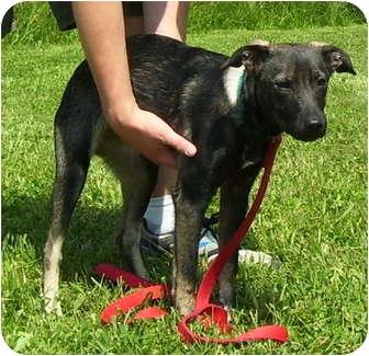 Shepherd (Unknown Type) Mix Dog for adoption in Somerset, Pennsylvania - Anita