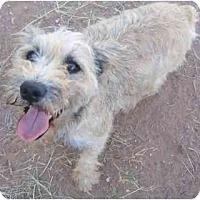 Adopt A Pet :: Mikey - Mesa, AZ