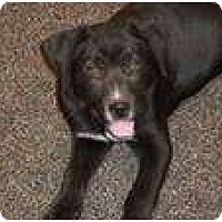 Adopt A Pet :: Graham (pending adoption) - Adamsville, TN