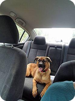 Shepherd (Unknown Type) Mix Dog for adoption in Greenville, North Carolina - Chloe