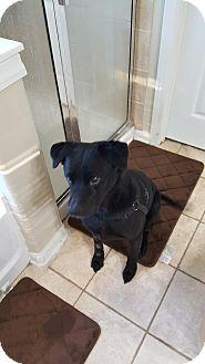 Labrador Retriever Mix Dog for adoption in Jacksonville, Florida - Max