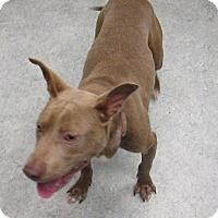 Mixed Breed (Medium) Mix Puppy for adoption in Warrenton, North Carolina - Rocky