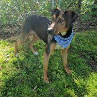 Adopt A Pet :: Bruno - Sylva, NC